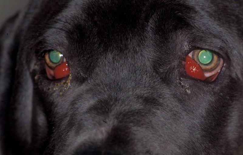 dogge6